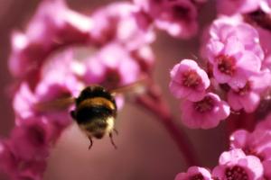 Flying bumblebee_by_nightwibe